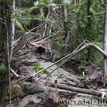 05 Viajefilos en Australia, Fraser Island 004