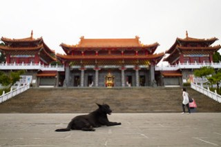 The temple guard dog