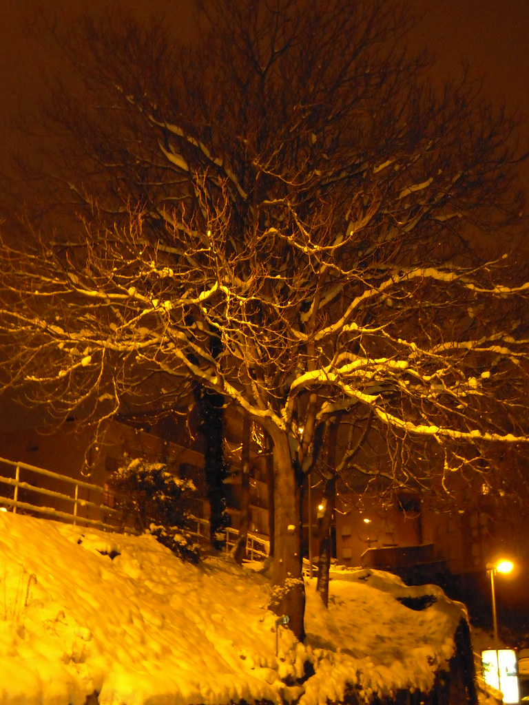 Au Pied De Mon Arbre : arbre, Arbre, Photos, Flickr