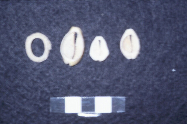 Shell Jewelry Beads
