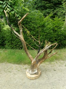 Feature driftwood