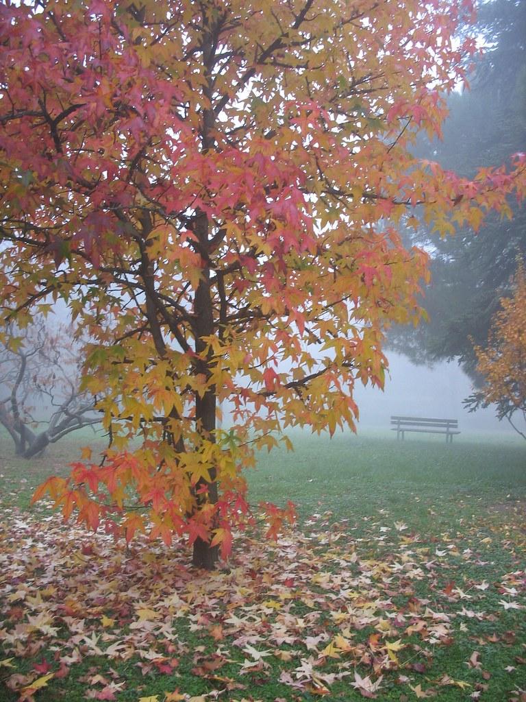 J'ai Cueilli Ce Brin De Bruyère : cueilli, bruyère, Autunno, Cueilli, Bruyère, L'automne, Mort…, Flickr