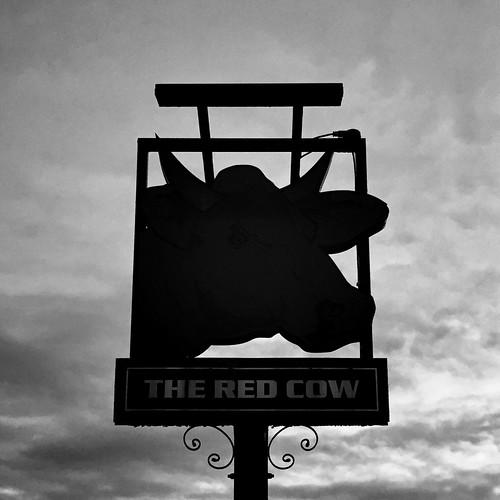 12/365 Dead Cow