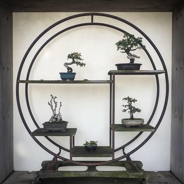 Bonsai collection