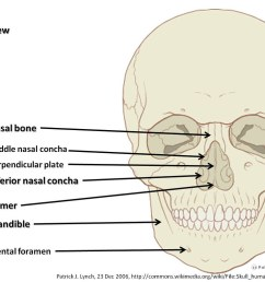 skull diagram anterior view with labels part 3 axial sk flickr page skull diagram  [ 1024 x 776 Pixel ]