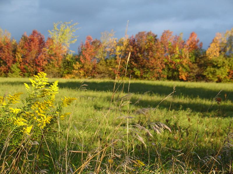 Hay field near Lotus, Kawartha Lakes, Ontario