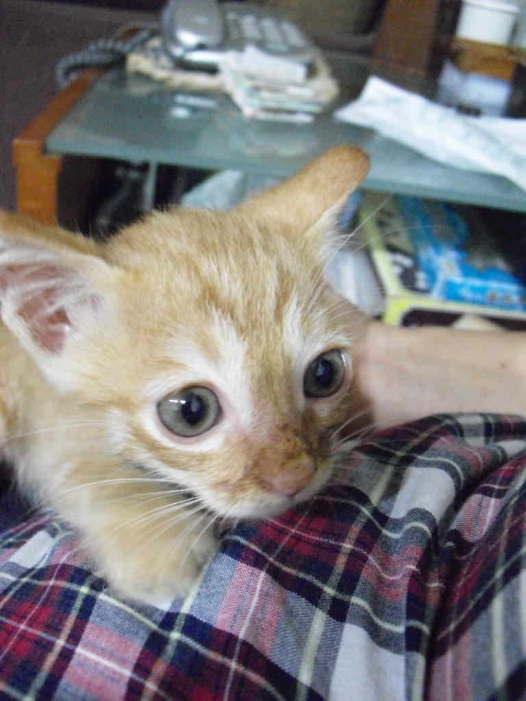 MISO | 他雖然笨了點 動作慢了點 但是他是一隻難得一見的乖貓 老實說 三隻貓咪 我最愛的就是他 這一句可以 ...