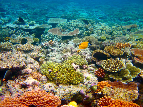The Great Barrier Reef - 164