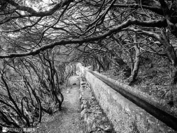 Madeira - 0059