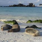 Viajefilos en La Espanola, Galapagos 104