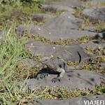 Viajefilos en La Espanola, Galapagos 018