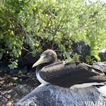Viajefilos en La Espanola, Galapagos 054