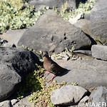 Viajefilos en La Espanola, Galapagos 034