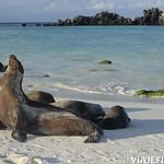 Viajefilos en La Espanola, Galapagos 105