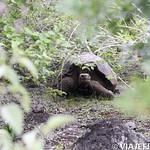 Viajefilos en San Cristobal, Galapagos 055