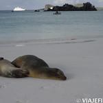 Viajefilos en La Espanola, Galapagos 078