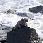 Viajefilos en La Espanola, Galapagos 010