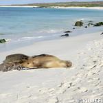 Viajefilos en La Espanola, Galapagos 086