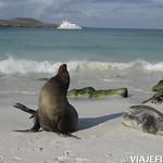 Viajefilos en La Espanola, Galapagos 083