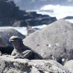 Viajefilos en La Espanola, Galapagos 059