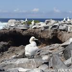 Viajefilos en La Espanola, Galapagos 069