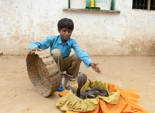 Lakhi Sapera who's family has been into snake charming for generations, show's of his skills, he attends   government run primary school which is a part of pilot project Continuous Comprehensive Evaluation (CCE) learning in village Medivas, district Alwar