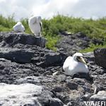 Viajefilos en La Espanola, Galapagos 057