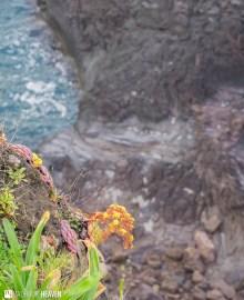 Madeira - 0485