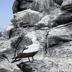 Viajefilos en La Espanola, Galapagos 065