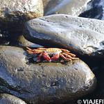 Viajefilos en La Espanola, Galapagos 004