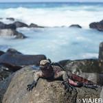 Viajefilos en La Espanola, Galapagos 063