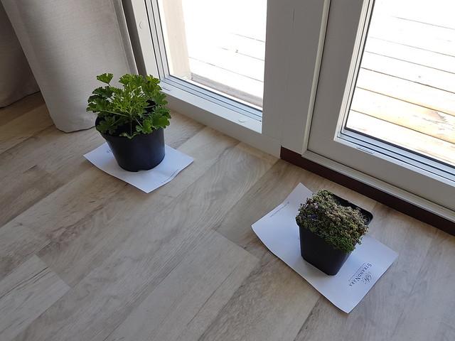 Enda bilden från rummet :) Våra växter får ljus