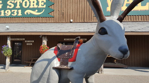 Bally at Wall Drug