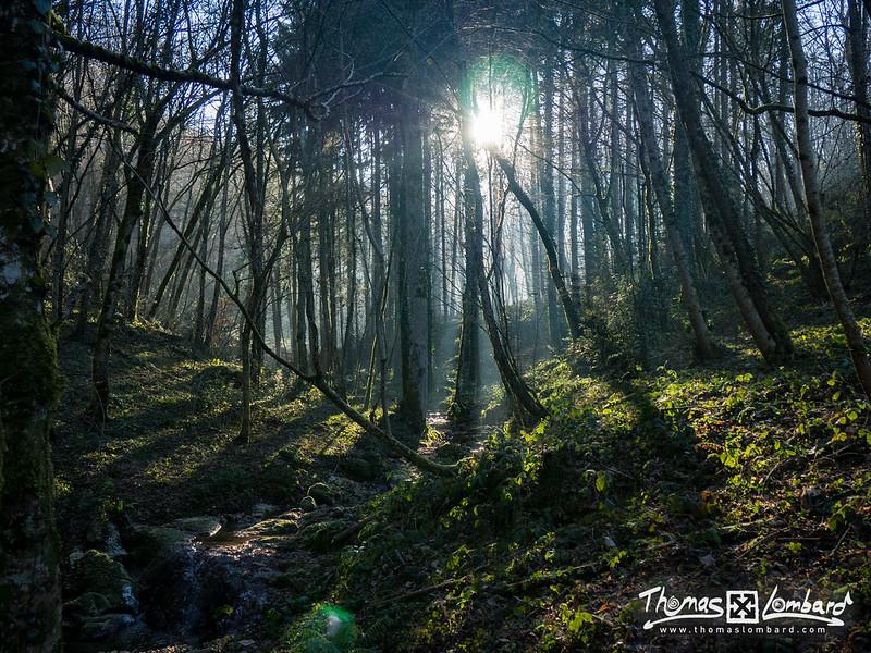 forêt à Boussières