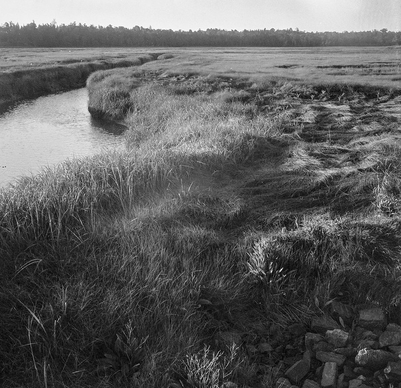 grasses, tidal channel, wetlands, South Thomaston, Maine, Welta Weltur, Ilford FP4+, Moersch Eco Film Developer, early July 2018