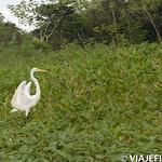 Viajefilos en la Amazonia, Peru 078