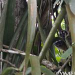 Viajefilos en la Amazonia, Peru 106