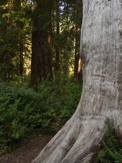 L'arbre Qui Cache La Foret : l'arbre, cache, foret, L'arbre, Cache, Forêt, #défi6, #crd43, Défi, Cadre…, Flickr