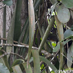 Viajefilos en la Amazonia, Peru 105