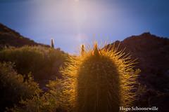 Sunrise at cactus-island