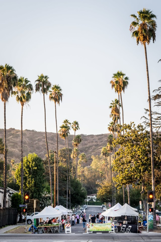 palm trees at the Eagle Rock farmers market