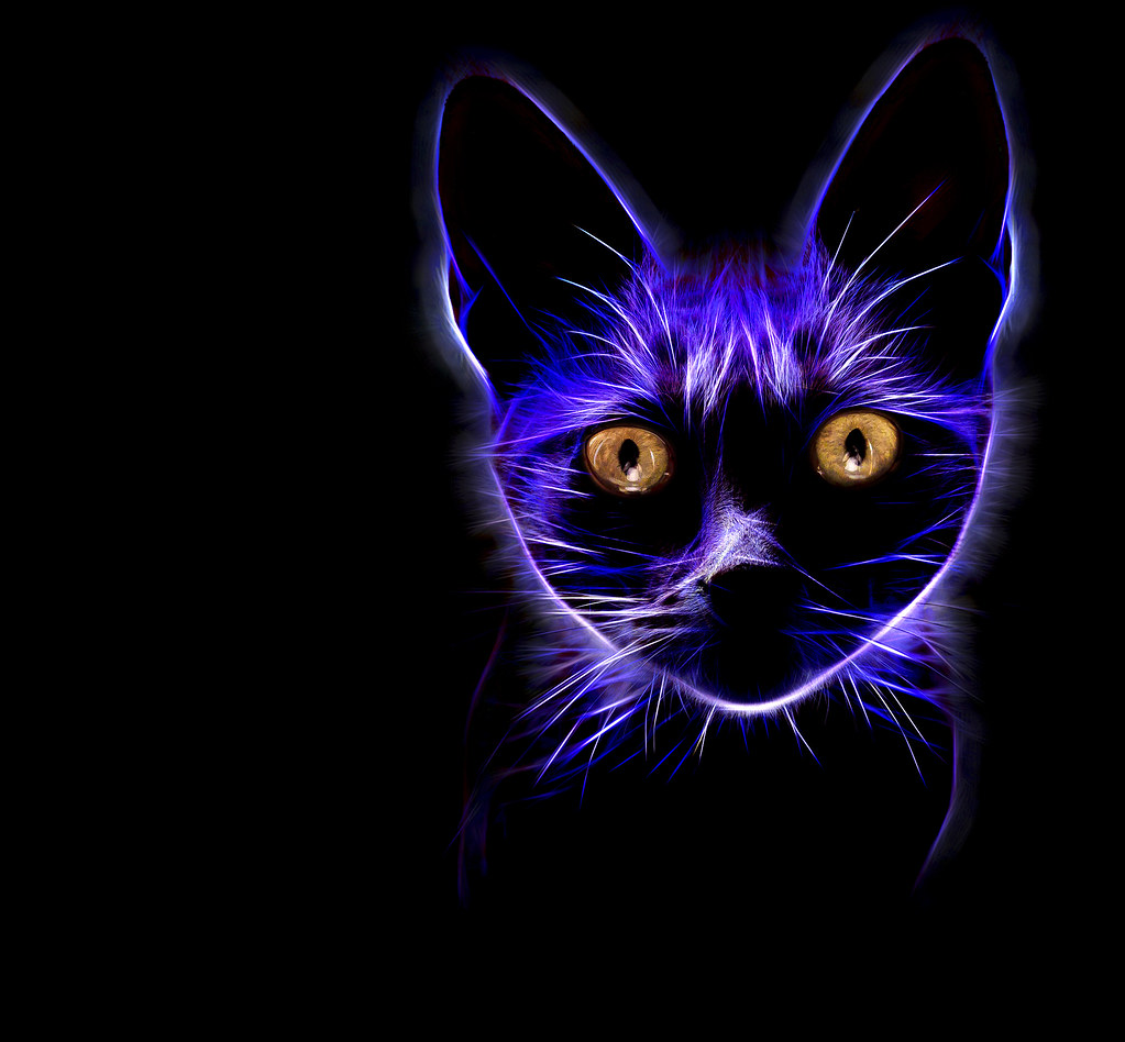 cats eyes another glowing
