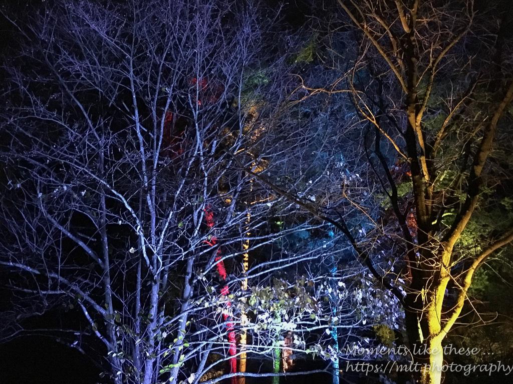 Westonbirt Winter Light Show