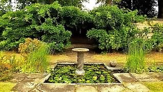 holiday-garden-57534__180