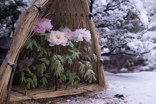 雪の花   shun iga   Flickr