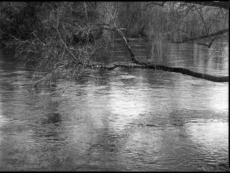 overhanging branches, reflections, French Broad River, Asheville, NC, Mamiya 645 PRO, Mamiya sekor 80mm f-2.8, Rollei Retro 400S, Moersch Eco Film Developer, mid February 2018