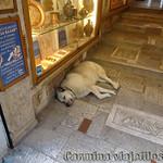 Viajefilos en Grecia, Atenas 019