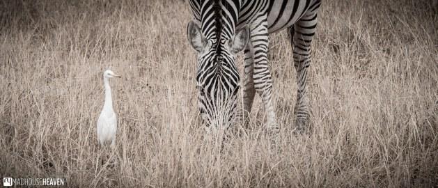 Kenya - 0347