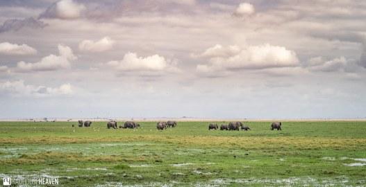 Kenya - 0470