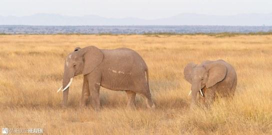 Kenya - 0194